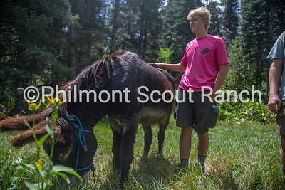 A scout pets a burro as it eats grass at Black Mountain camp on Sunday, August 11, 2019 at Philmont Scout Ranch in Cimarron, New Mexico.
