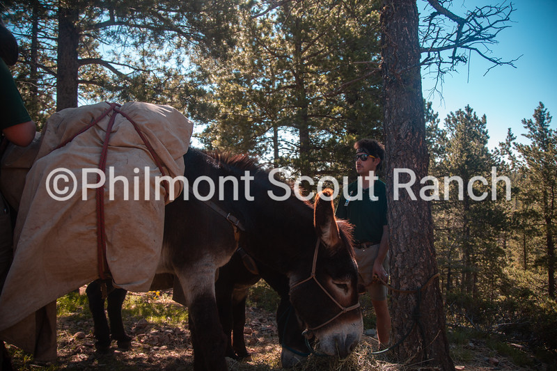 Charlie Vesely ties the burros to a tree at the top of the Black Mountain drop off on Tuesday, August 13, 2019 at Philmont Scout Ranch in Cimarron, New Mexico.