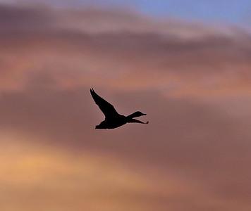 Smoky Silhouette  in Evening Sky (1)