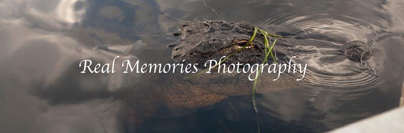 ©RMP2012-03-10-2012- Sunset-Safari_-37
