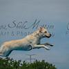 Scheels Super Retriever Water Jumping Competition - Summer 2012 - Mankato, MN