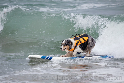 SurfDog-22