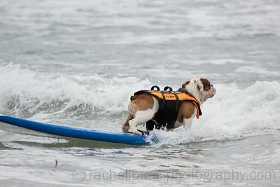 SurfDog-04