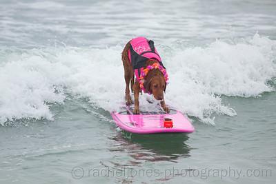 SurfDog-20