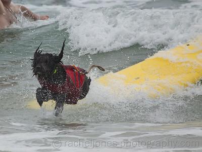 SurfDog-14