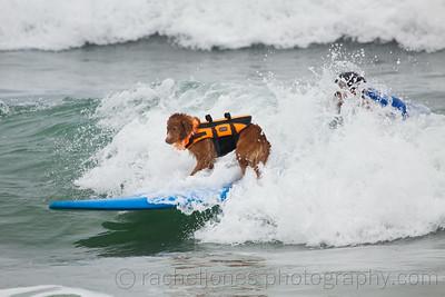 SurfDog-30