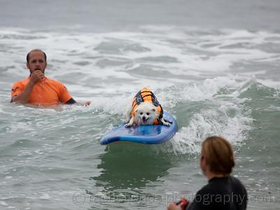 SurfDog-36