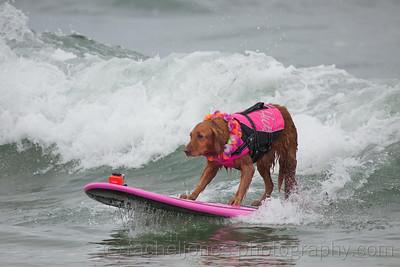 SurfDog-08
