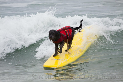 SurfDog-19