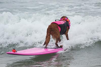 SurfDog-16