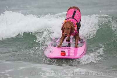SurfDog-09