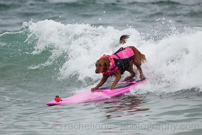 SurfDog-06