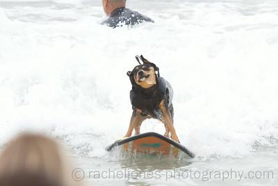 SurfDog-03