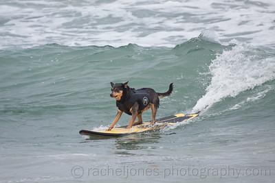 SurfDog-24