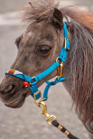 hey horse