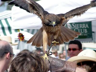 Swallow's Day, SJC 2004
