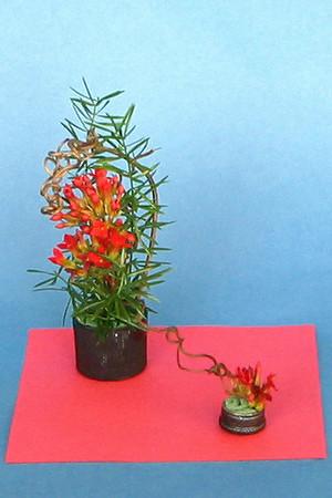 TGC!nc 2010 Standard Flower Show