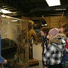 Looking at some of the museum animals on display.