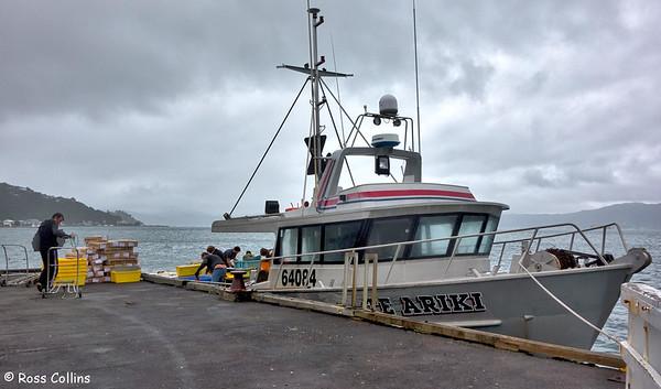 Te Ariki at Seatoun Wharf 2015