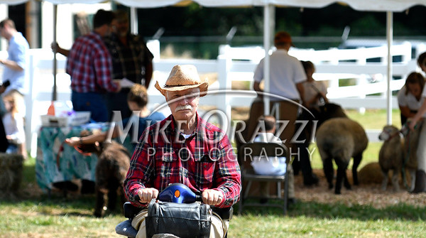 8/26/2017 Mike Orazzi | Staff Dale Parsons-Marchione at the Terryville Lions County Fair Saturday morning.