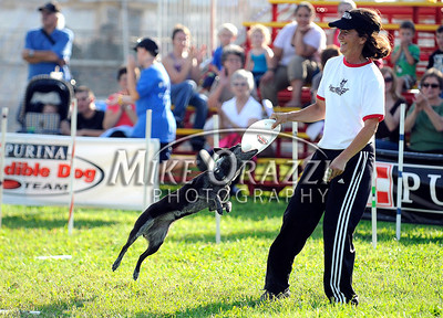 8/26/2011 Mike Orazzi | Staff The Marvelous Mutts' Nadja Palenzuela works with Lolita during a their Canine Spectacular on opening day at the Terryville Fair on Friday evening.