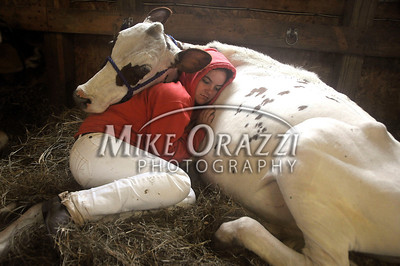 8/27/2011 Mike Orazzi | Staff Alyssa Sambrook cuddles with Tinker 7, an Ayrshire cow while at the Terryville Country Fair on Saturday morning.