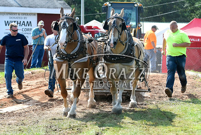 8/26/2017 Mike Orazzi | Staff The Stevens and Beatty team during the horse pull at the Terryville Lions County Fair Saturday morning.