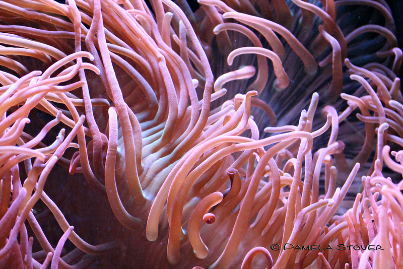 Coral<br /> © Pamela Stover<br /> Exposed Images Photography