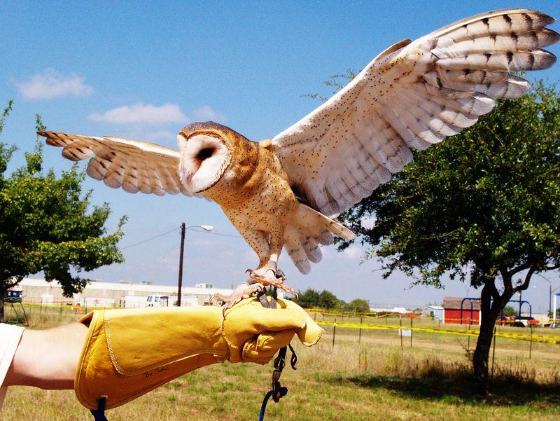 Texas Parks & Wildlife Expo 2004