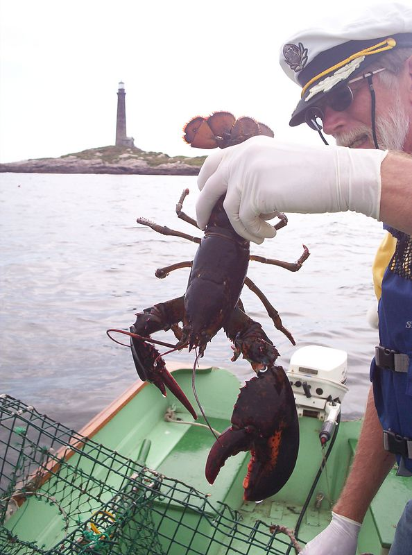 The biggest of 5 lobsters for today's catch.