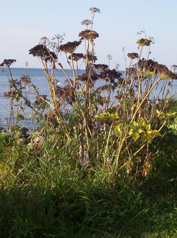 An island scene