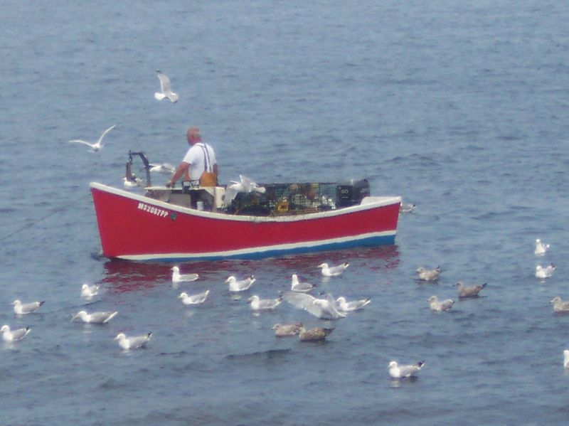 Corey Dorey out to pull his traps. Sea gulls flock to get the discarded bait.