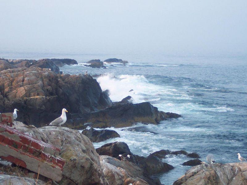 Rocky waves.