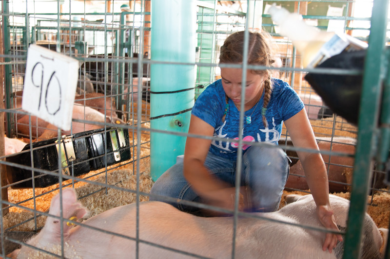 Matthew Gaston | The Sheridan Press<br>Sierra Powers grooms her pig before the Swine Show at the Sheridan County Fair Thursday, Aug. 1, 2019.