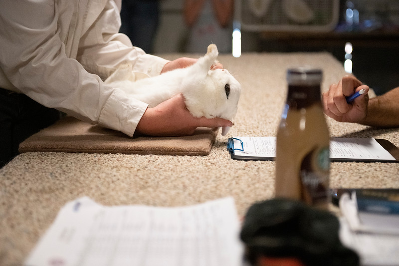 Matthew Gaston | The Sheridan Press<br>Keira Benedict flips her rabbit over on to its back to demonstrate for the judge, Shaun Smith, how check the rabbits legs to make sure they are healthy during the Rabbit Show at the Sheridan County Fairgrounds Friday, Aug. 2, 2019.