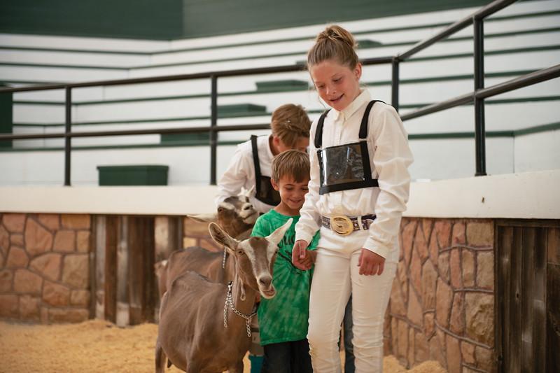 Matthew Gaston | The Sheridan Press<br>Mason Swinyer, left, accompanies Willow Koltiska during the Junioe Kid event at the Goat Show Saturday, Aug. 3, 2019.