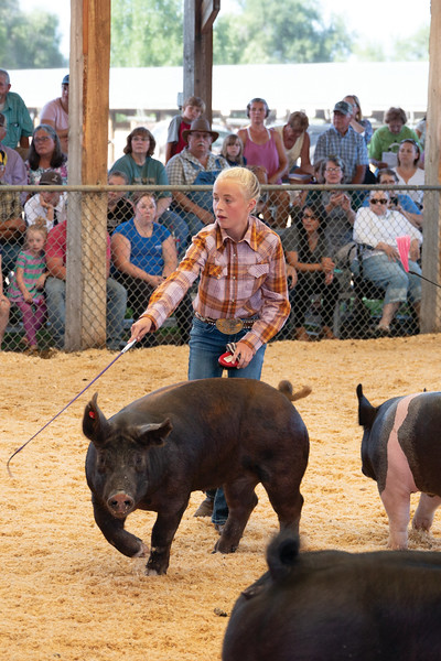 Matthew Gaston | The Sheridan Press<br>Natalee Herbst works her pig at the Swine show during the Sheridan County Fair Thursday, Aug. 1, 2019.