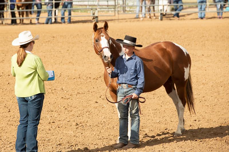 Matthew Gaston | The Sheridan Press<br>Kolten Powers presents his horse to judge Lanae McDonald during the Intermediate Horse Showmanship event at the Sheridan County Fair Thursday, Aug. 1, 2019.