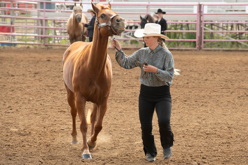 Matthew Gaston | The Sheridan Press<br>Betty Jerney walks her horse through the course during the Senior Horse Showmanship event at the Sheridan County Fair Thursday, Aug. 1, 2019.