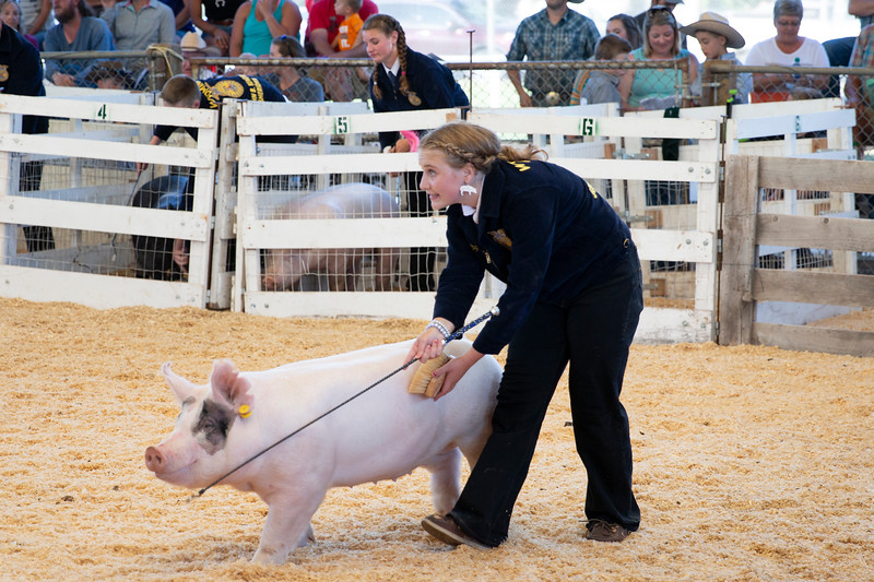 Matthew Gaston | The Sheridan Press<br>Maggie May McStay was named the FFA Swine Showmanship champion at the Sheridan County Fair Thursday, Aug. 1, 2019.