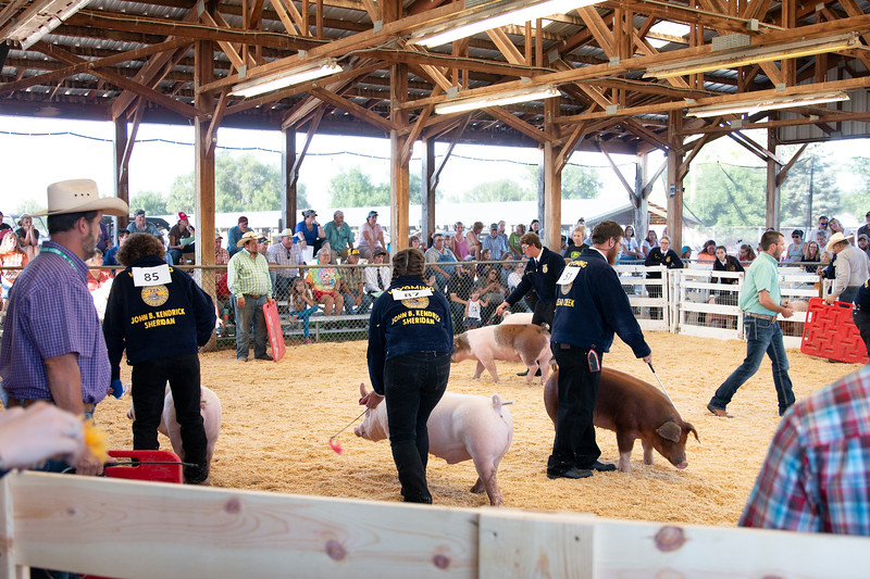 Matthew Gaston | The Sheridan Press<br>The Swine Show at the Sheridan County Fair attracted a large crowd Thursday, Aug. 1, 2019.