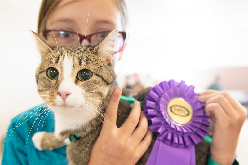 Matthew Gaston | The Sheridan Press<br>Kit Kat and her owner, 11-year-old Kadia Miller were named Grand Champions during the 4-H Cat Show at the 2019 Sheridan County Fair Wednesday, July 31, 2019.