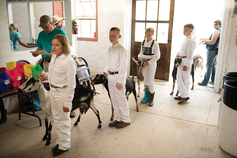 Matthew Gaston | The Sheridan Press<br>From left, Morgan Kepley, Ryan Petzold Amia Koltiska and Jacob Brown line up for the Intermediate Dairy Goat Showmanship event at the Sheridan County Fair Saturday, Aug. 3, 2019.