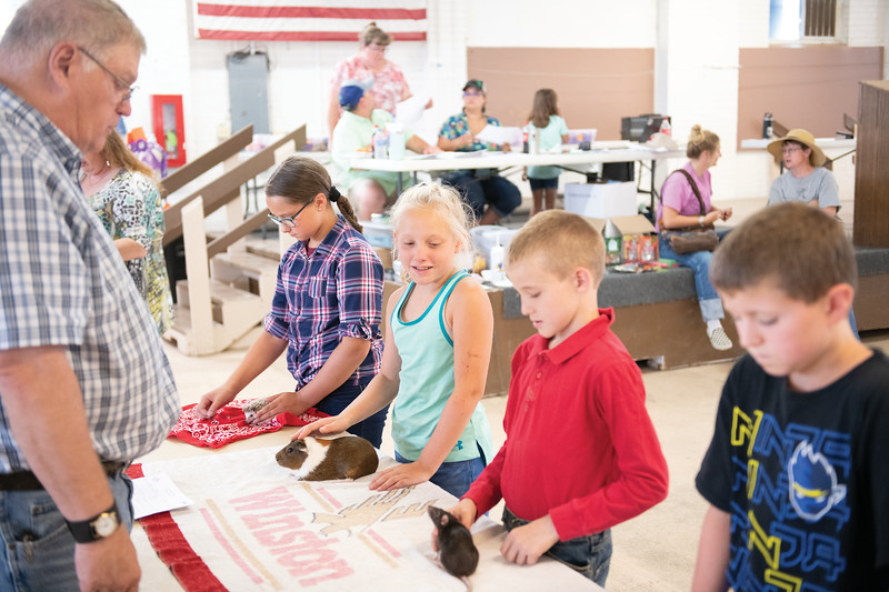Matthew Gaston | The Sheridan Press<br>Eleven-year-old Taylor Music, center, looks skeptically at Ian Petzold's rat Jessie during the Pocket Pet Show Tuesday, July 30, 2019.