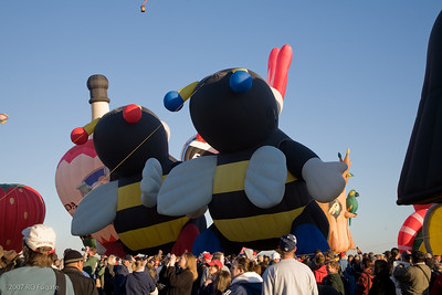 Bumblebees inflate