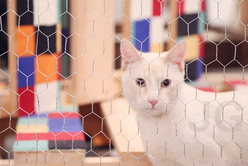 Cat Show at White Columns<br /> New York CIty, USA - 06.14.13<br /> Credit: J GRASSI