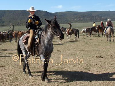 Sombrero Horse Drive May 2011
