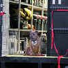 "Dogs on the set of ""The Judge,"" in Shelburne Falls, Massachusetts."