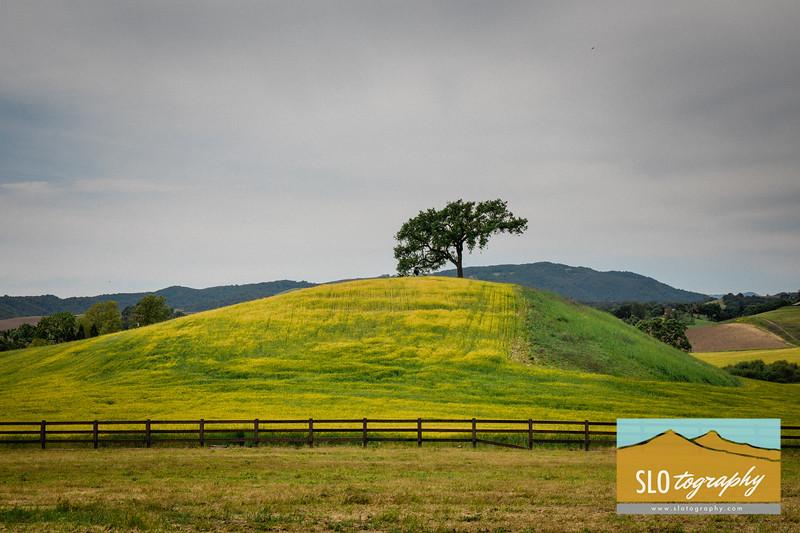 Blake's Meadow Pics_001
