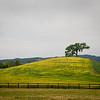 Blake's Meadow Pics_002